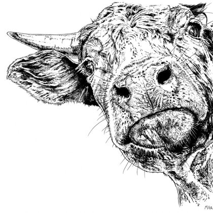 Curious Cow. Ink pen. All rights reserved.