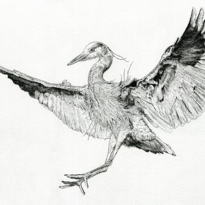 Flying Heron. Ink pen. All rights reserved.