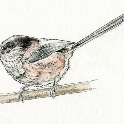 Long Tailed Tit. Ink pen and watercolour. All rights reserved.
