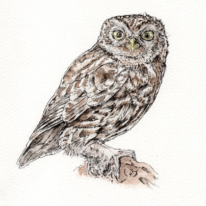 Little Owl. Ink pen and watercolour. All rights reserved.