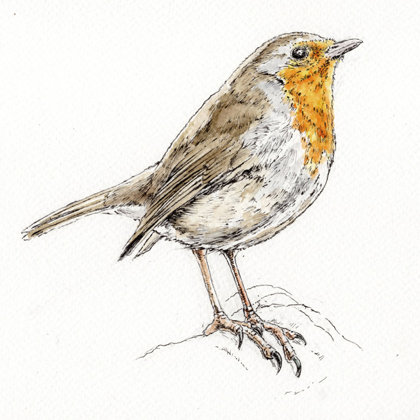 Robin. Ink pen and watercolour. All rights reserved.