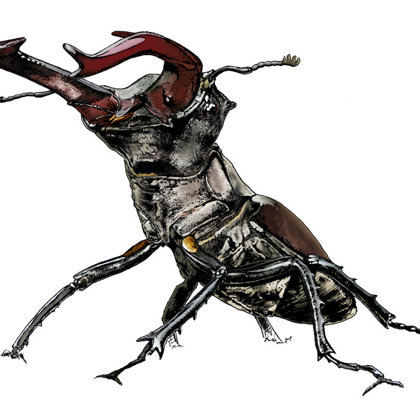 Stag Beetle. Ink pen and inks. All rights reserved.