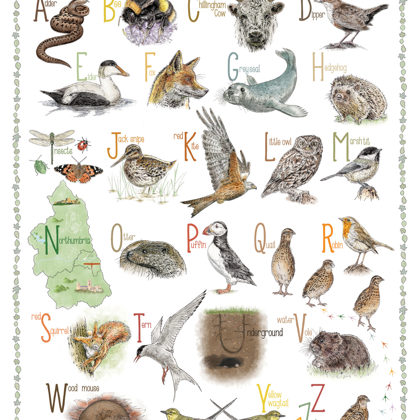 Northumbrian Animal Alphabet. All rights reserved.