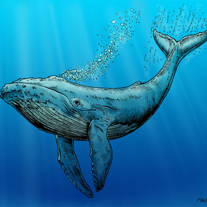 Blue Whale illustration. All rights reserved.